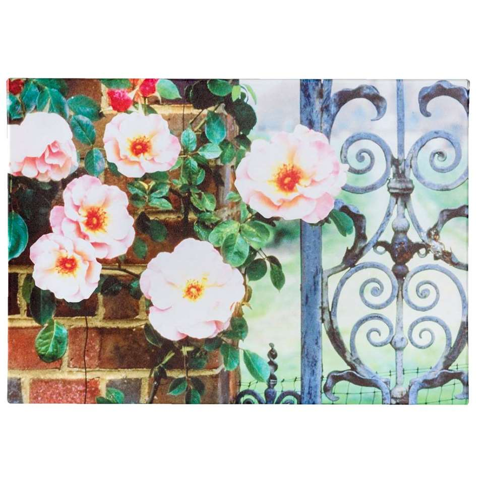 Tuinschilderij Roos - 50x70 cm - Leen Bakker