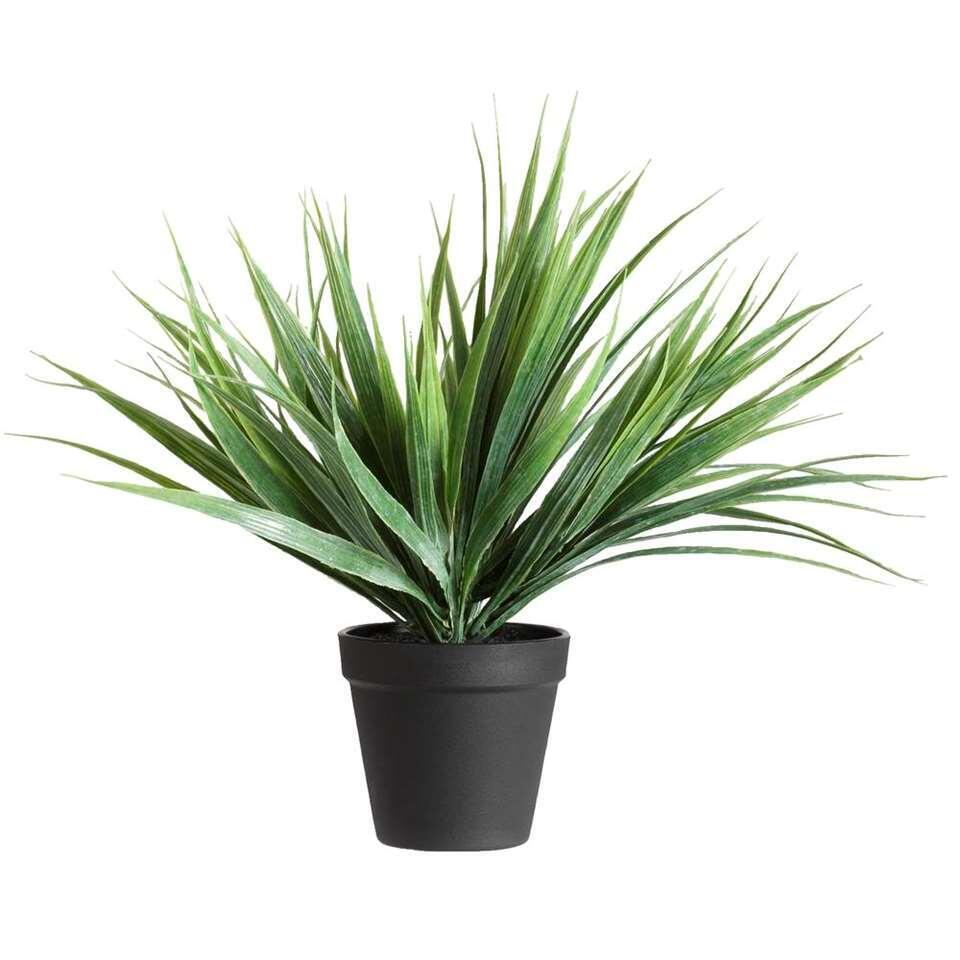 Siergras in pot - 30 cm