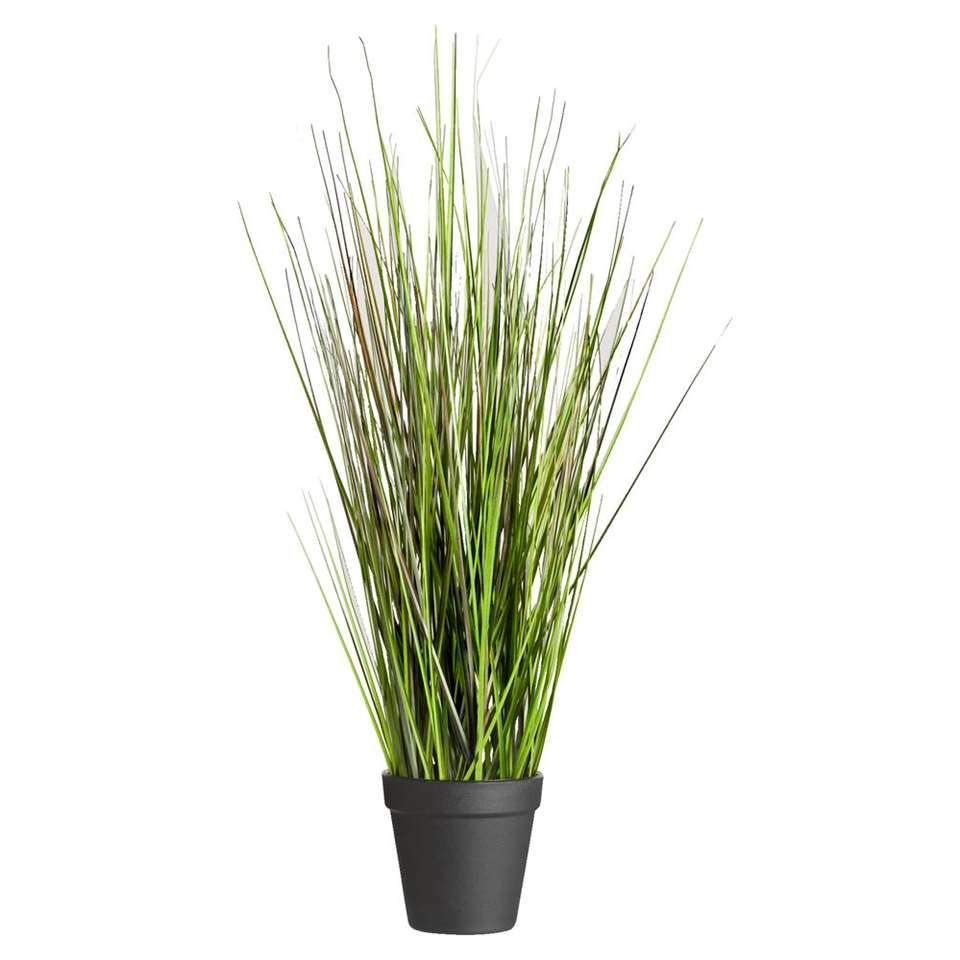 Grass Bush in pot - 53 cm