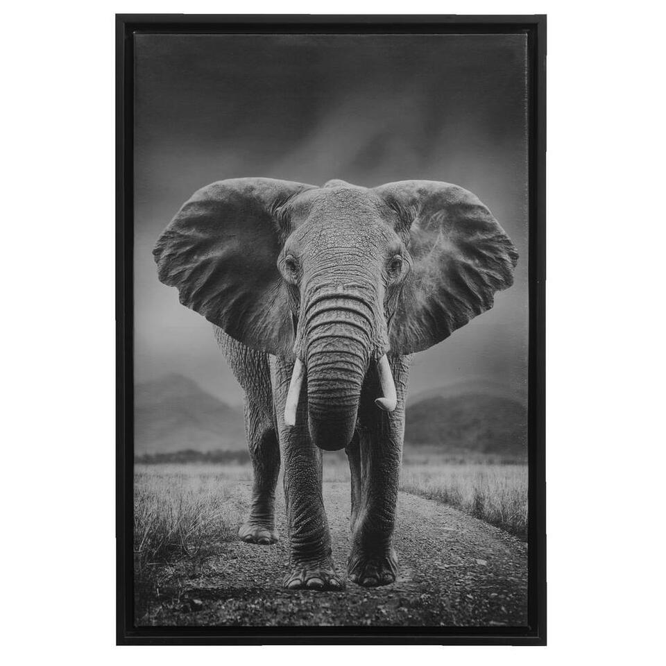 Tableau sur toile Eléphant - noir - 64x44x4 cm