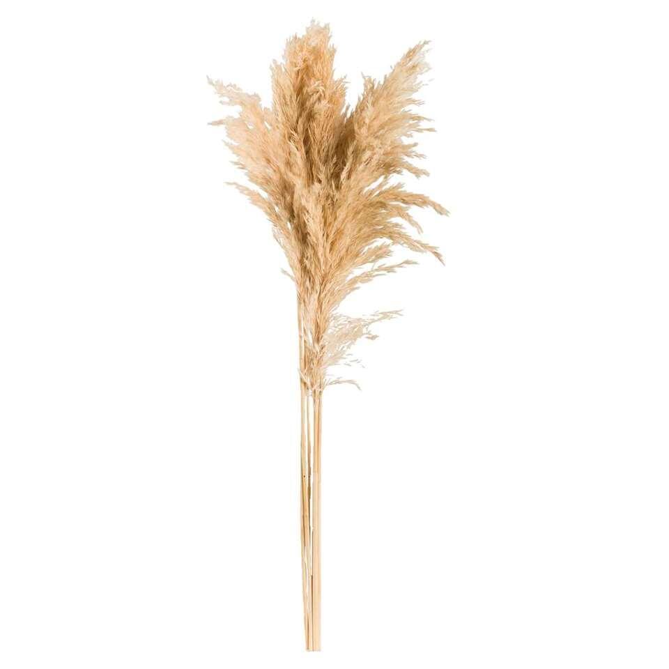 Pampas gras (6 stuks) - crème - 75 cm