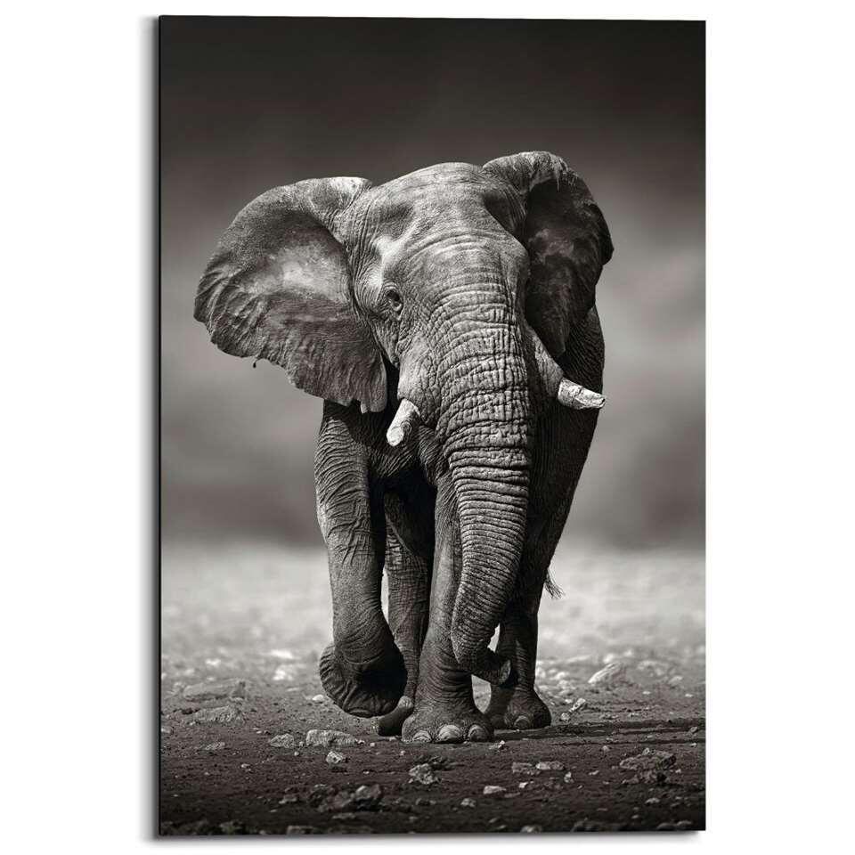 Panneau décoratif Eléphant courant - noir/blanc - 60x90 cm
