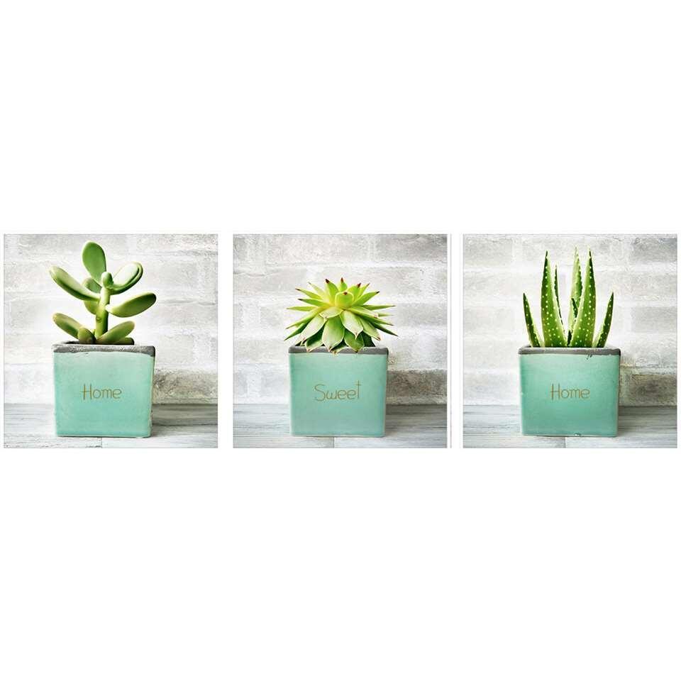 Art for the home décoration murale Plantes grasses - 3 pièces - 3x 20x20 cm